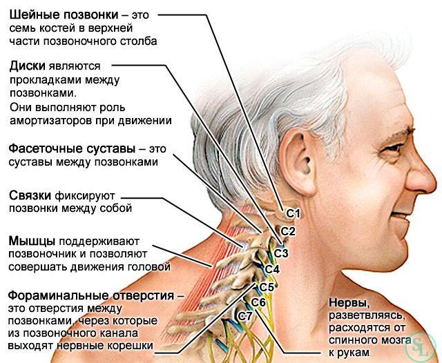 Эндоскопические операции при грыже шейного отдела позвоночника thumbnail
