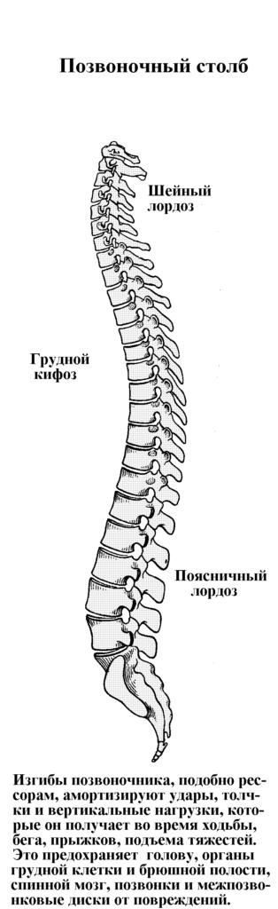 Операция на позвоночнике при грыже в грудном отделе
